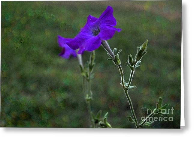 Purple Petunia Botanical Study Greeting Card by ARTography by Pamela Smale Williams