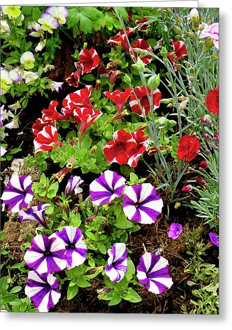 Petunia Flowers Greeting Card by Ian Gowland