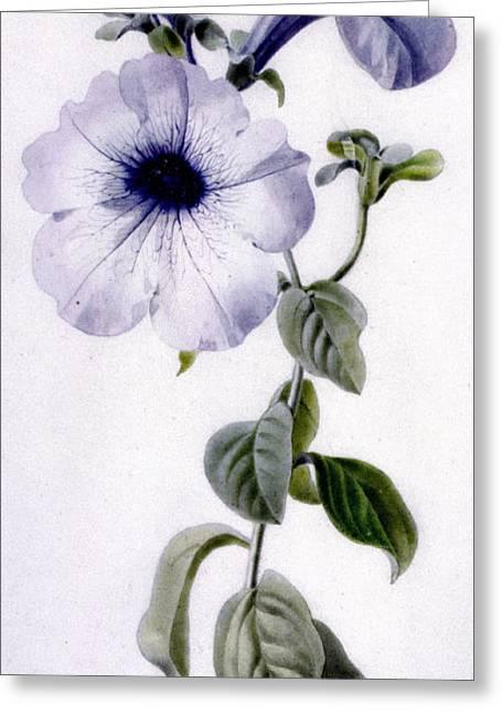 Petunia Greeting Card by Marie-Anne