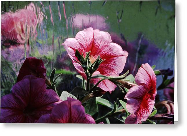 Petunia Reflection Greeting Card