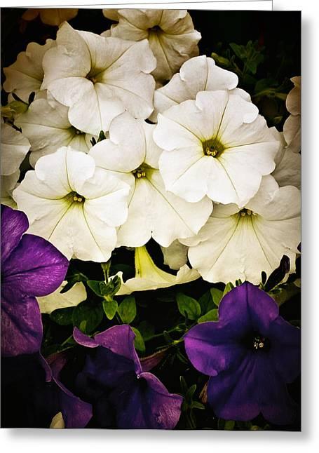 Petunias Greeting Card by Susan Kinney