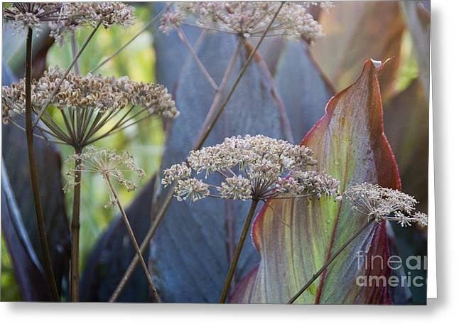 Peucedanum Verticillare Greeting Card by Carol Casselden