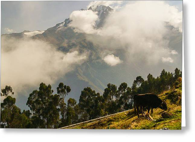 Peru Mountains With Cow Greeting Card by Allen Sheffield