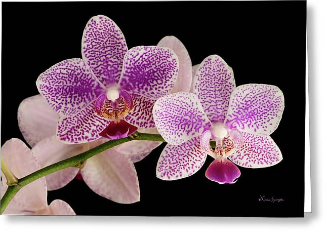 Phal Greeting Card