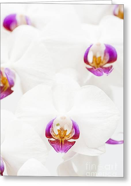 Phalaenopsis Greeting Card by Anne Gilbert