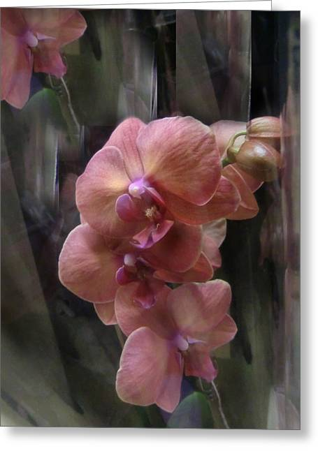Phalaenopsis Orchid B Greeting Card by Mitzi Lai