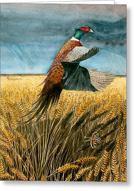 Pheasant Rising Greeting Card