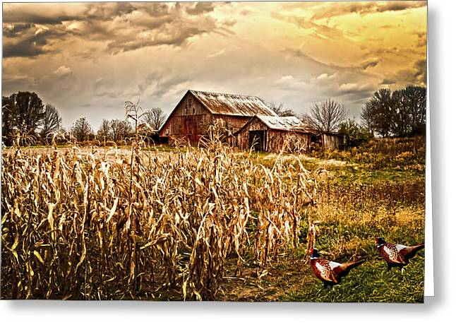 Pheasants Heading For Corn Patch Greeting Card