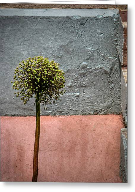 Philly Plant Greeting Card by Glenn DiPaola