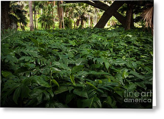 Philodendron Covering Greeting Card