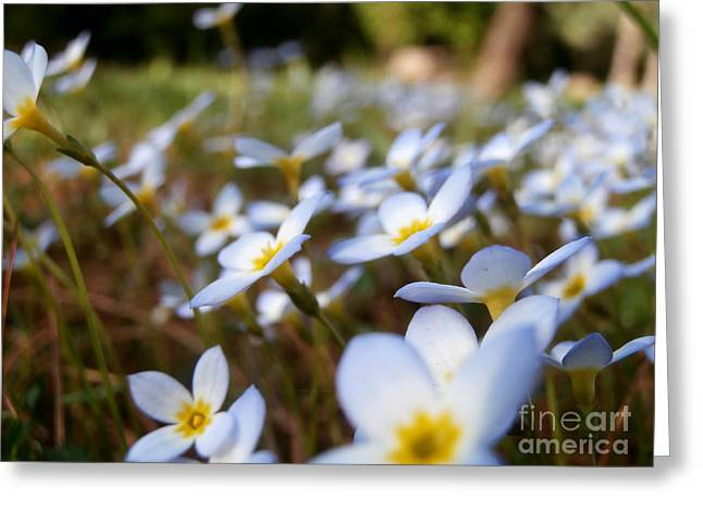 Phlox In The Wind Greeting Card by Steven Valkenberg