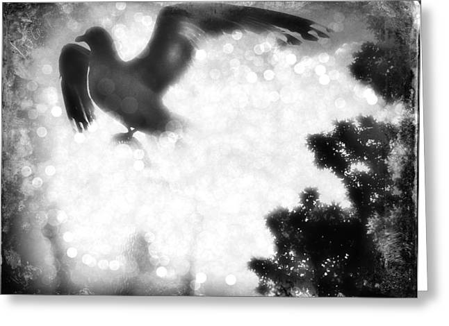Phoenix IIi Greeting Card by Aurelio Zucco