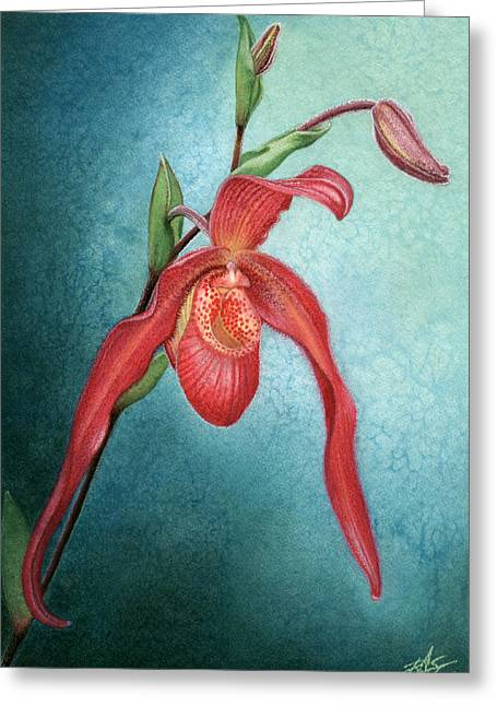 Phragmipedium Fire Cascade Greeting Card