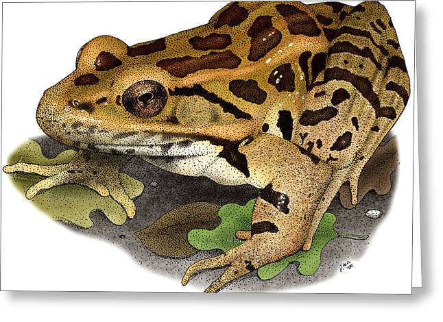 Pickerel Frog Greeting Card by Roger Hall