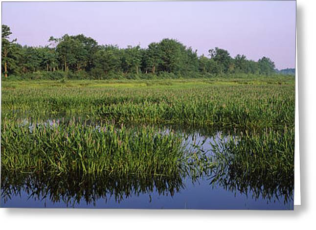 Pickerelweed In A Lake, Long Pond Greeting Card
