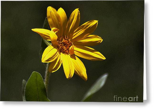 Pickin' Wildflowers  Greeting Card by Juls Adams