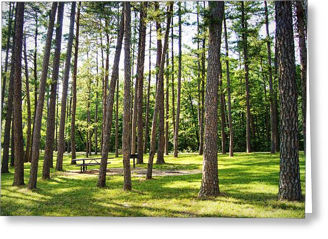 Picnic In The Pines Greeting Card