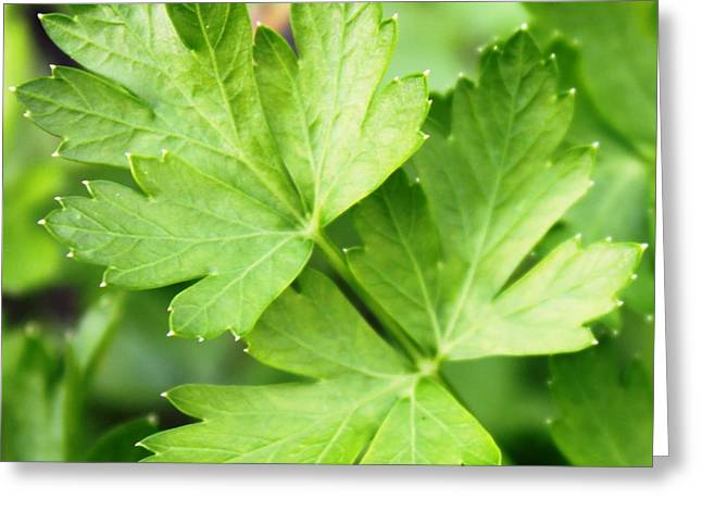 Picture Perfect Parsley Greeting Card by French Toast