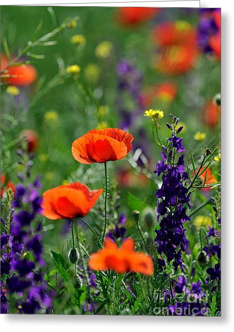 Pictures Of Colorful Flowers Greeting Card