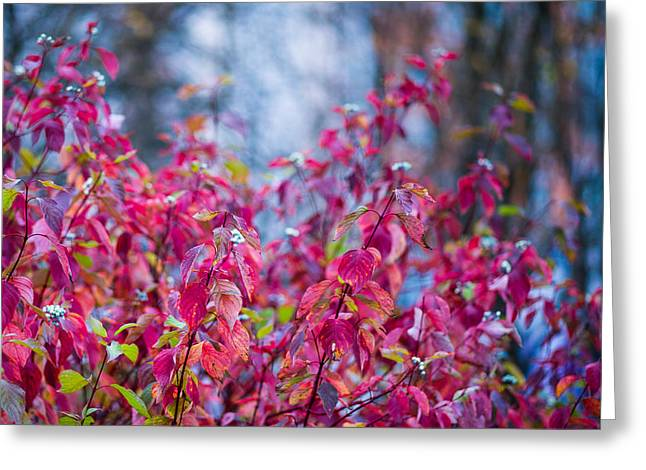 Picturesque Autumn - Featured 3 Greeting Card by Alexander Senin