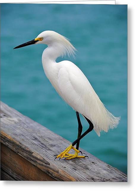 Pier Bird Greeting Card