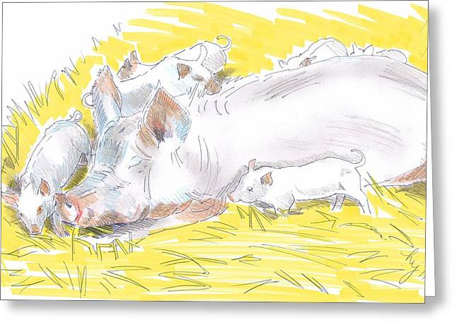 Pig Sow And Piglets Greeting Card