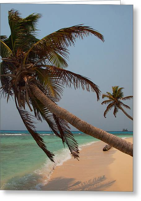 Pigeon Cays Palm Trees Greeting Card