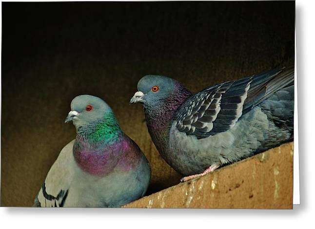 Pigeon Couple Greeting Card