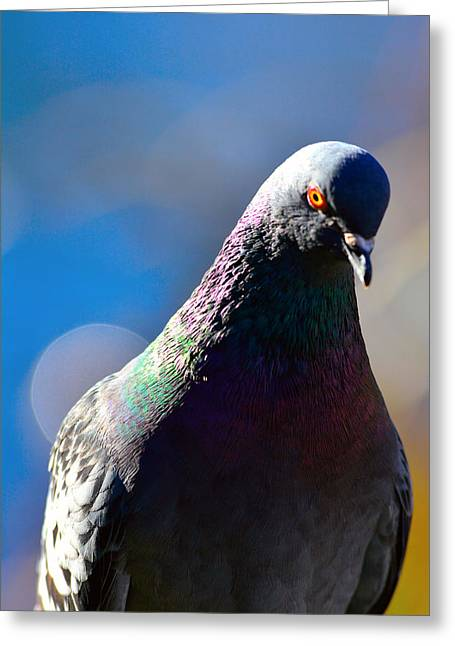 Pigeon In Closeup Greeting Card by Tommytechno Sweden