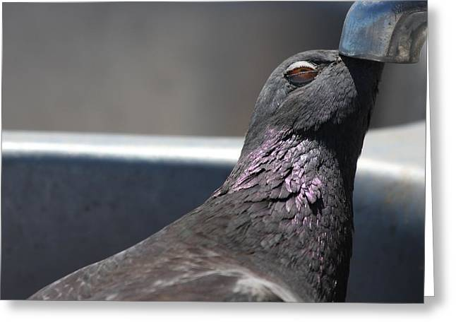 Pigeon In Ecstasy  Greeting Card