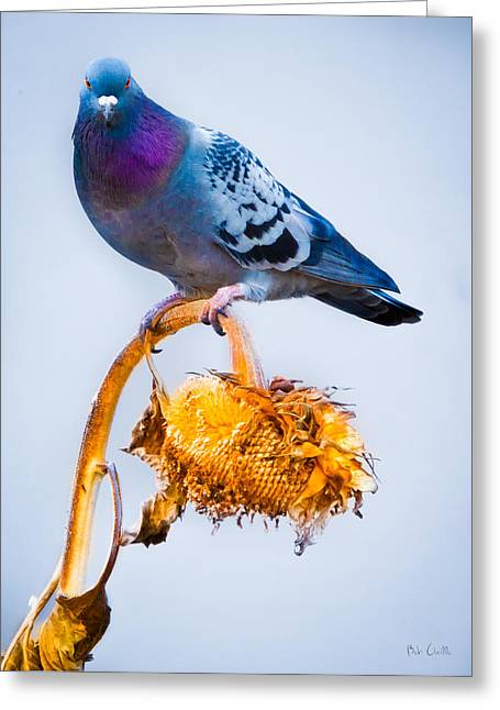 Pigeon On Sunflower Greeting Card by Bob Orsillo