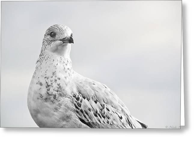 Pigeon Pride II Greeting Card by Nicola Nobile
