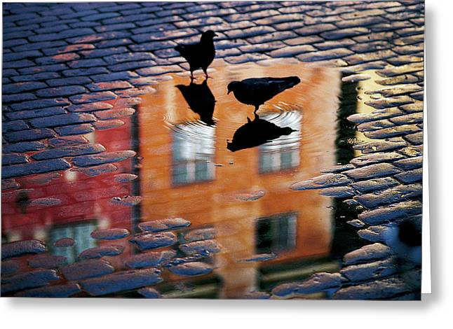 Pigeons Greeting Card