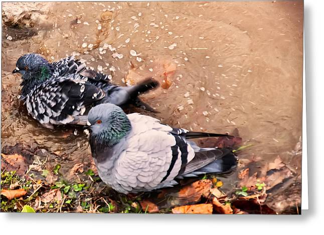 Pigeons Bathing Greeting Card by Chris Flees