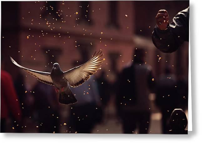 Pigeons In Patan Square, Kathmandu-nepal Greeting Card