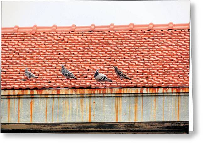 Greeting Card featuring the photograph Pigeons On Roof by Aaron Martens