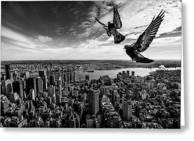 Pigeons On The Empire State Building Greeting Card