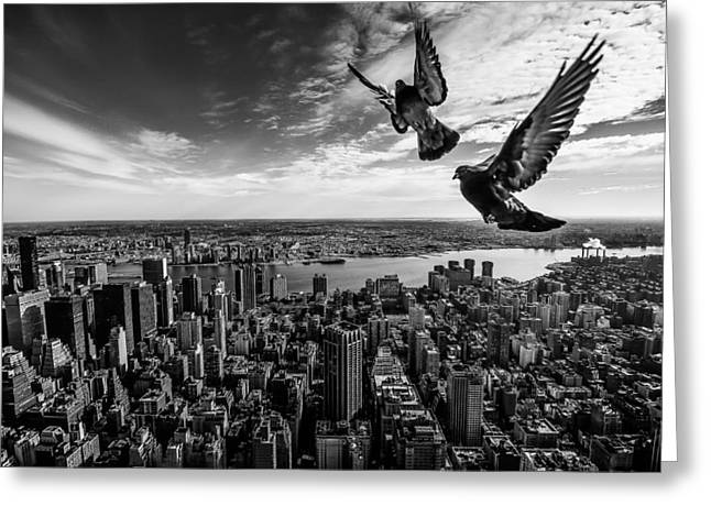 Pigeons On The Empire State Building Greeting Card by Sergiosousa