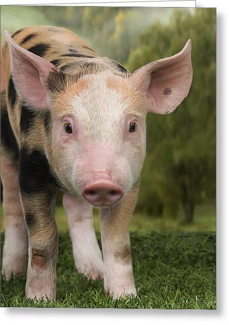 Piglet Greeting Card by Jean-Michel Labat
