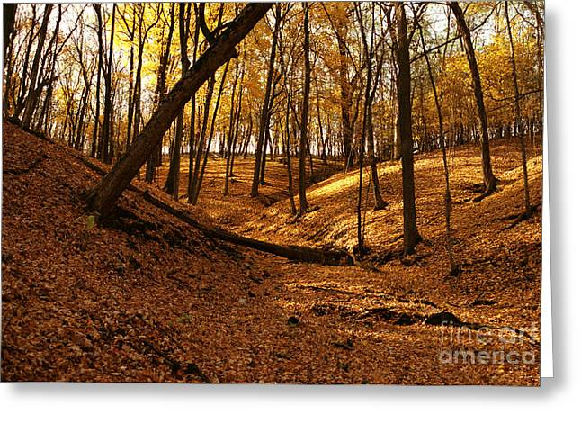 Pikes Peak Park Yellow Fall Greeting Card by Joan Liffring-Zug Bourret