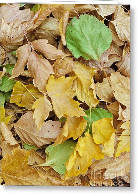 Pile Of Autumn Leaves Greeting Card by John Shaw