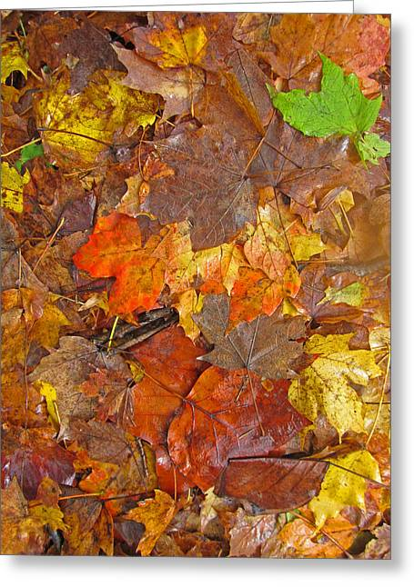Pile Of Leaves Greeting Card