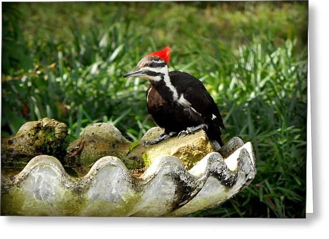 Pileated Woodpecker II Greeting Card by Lynn Griffin