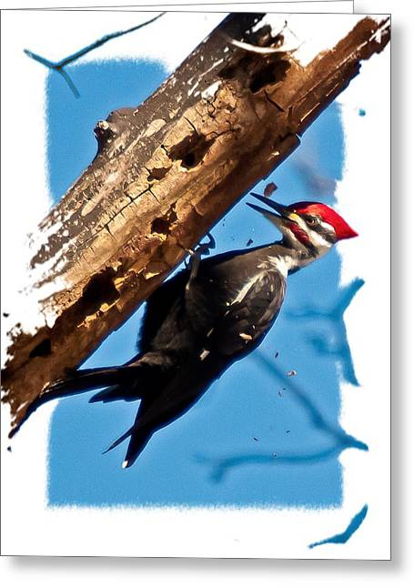 Greeting Card featuring the photograph Pileated Woodpecker by Robert L Jackson