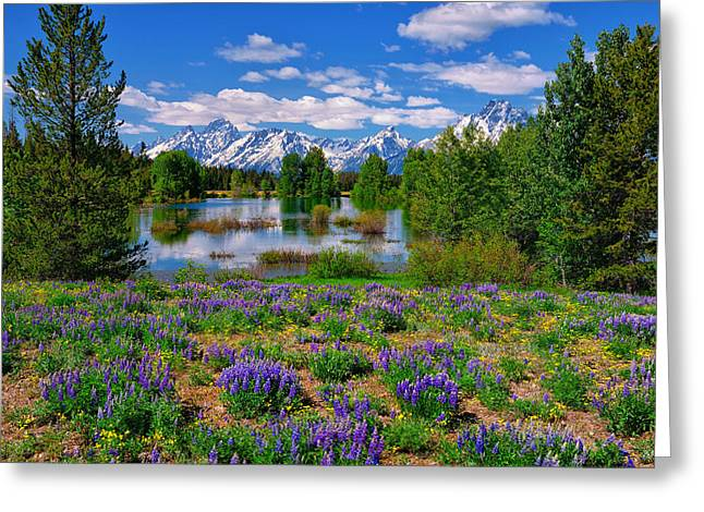 Pilgrim Creek Wildflowers Greeting Card by Greg Norrell