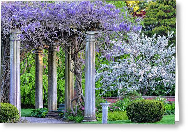 Pillars Of Wisteria Greeting Card