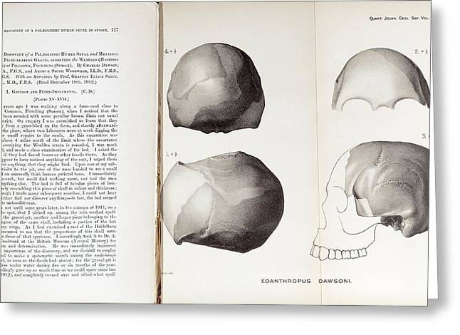 Piltdown Man Skull And Paper Greeting Card by Paul D Stewart