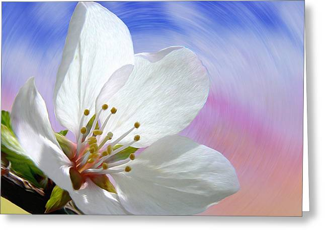Pin Cherry Swirl Greeting Card
