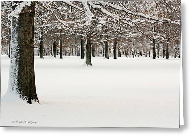 Greeting Card featuring the photograph Pin Oaks Covered In Snow by Ann Murphy