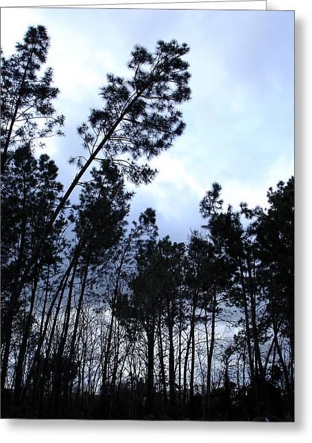 Pin Tree Sunset Greeting Card by Michel Mata